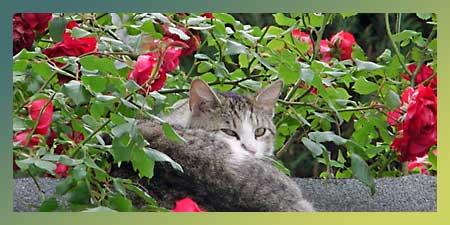 Kot ma być śliczniutki i milutki (fot. Nacho)