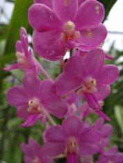 kwiaty03