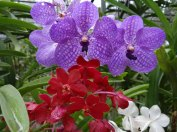 kwiaty06