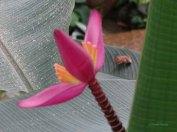 kwiaty15
