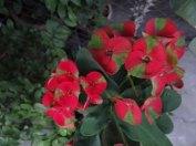 kwiaty17