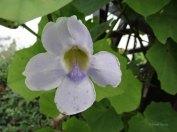 kwiaty19
