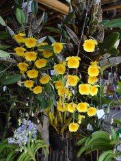 kwiaty22