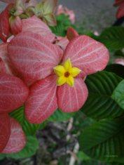 kwiaty31