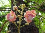 kwiaty35