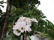 kwiaty36