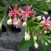 kwiaty38